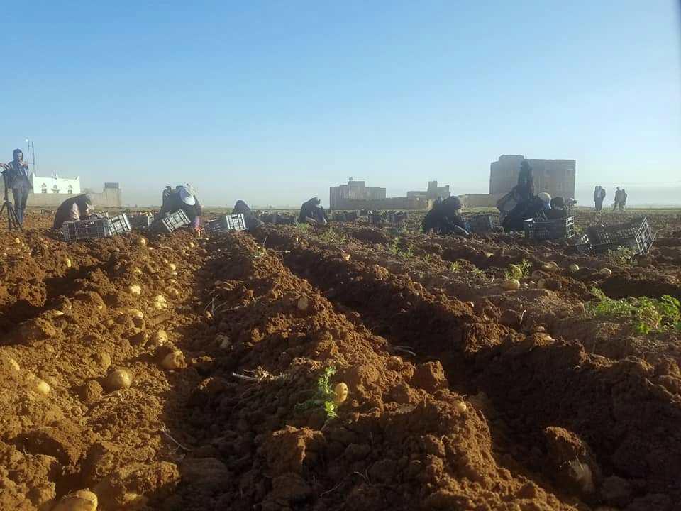 التوجه الزراعي للتمويل الأصغر أرباح وأمن غذائي